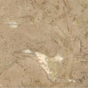 MARBRE FOSSIL BEIGE